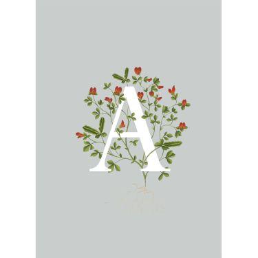 Botanical Grey Alphabet Greeting Cards